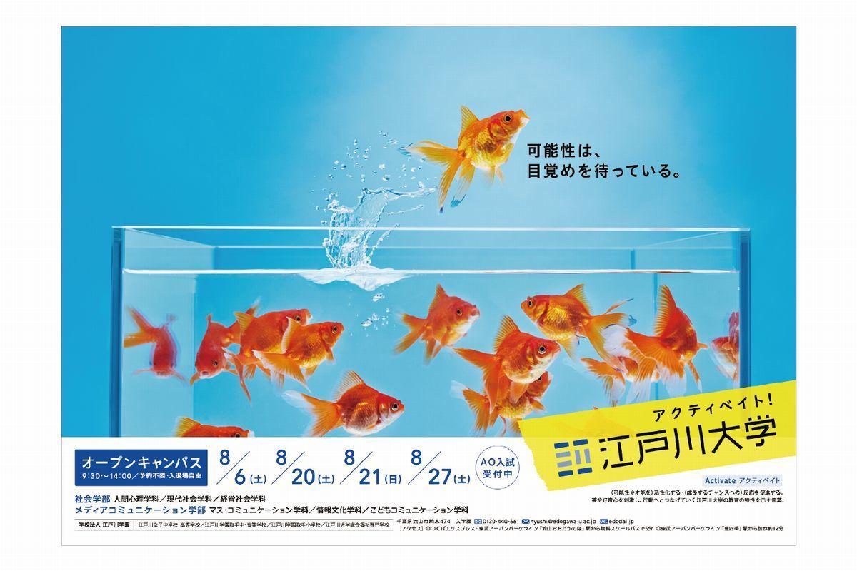 水槽から飛び出す金魚の撮影に貸出し 水槽レンタ …